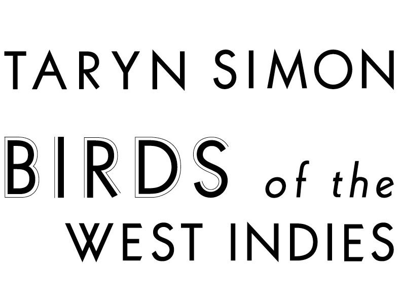 Taryn_birds-title-centered.jpg