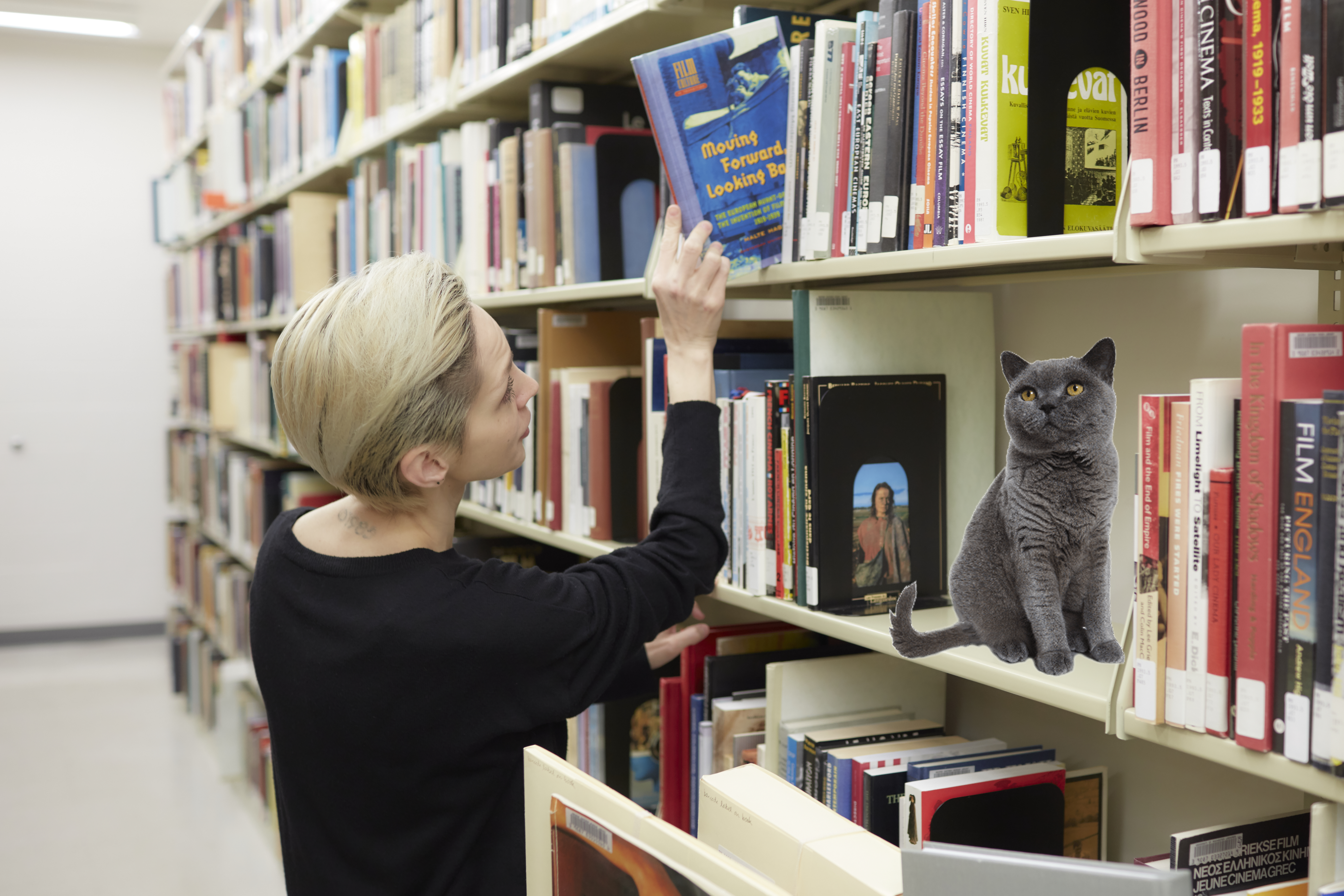 Badly photoshopped cat in the library