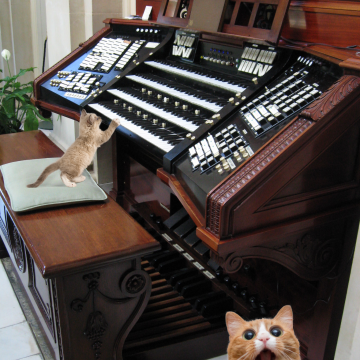 Badly photoshopped cat by organ