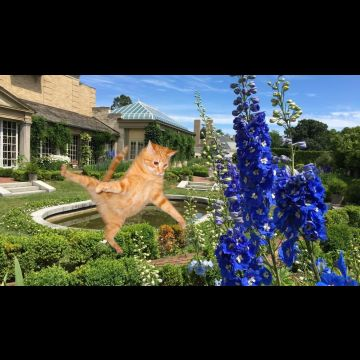 Badly photoshopped cat in flowers